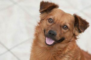 Integrative Veterinary Medicine